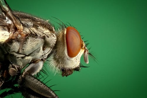housefly-fly-insect-macro