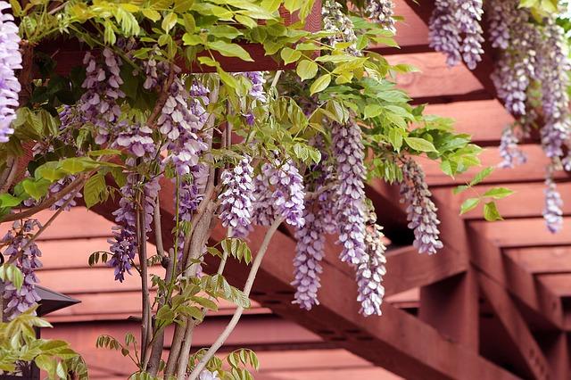 pergola s květinami